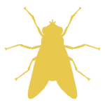 Tulsa Ant Control