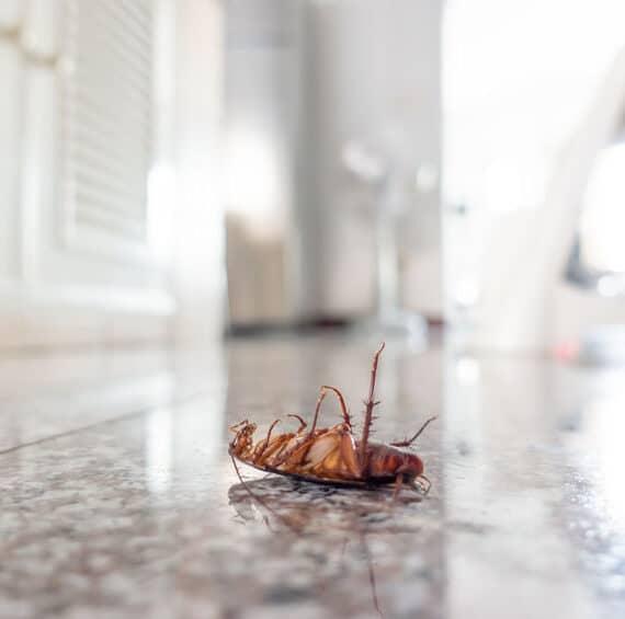 Broken Arrow Termite Control