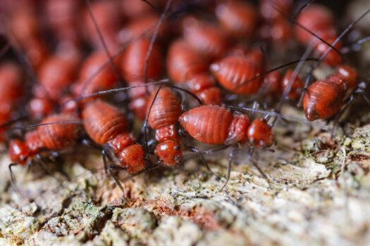 Termite Control in Tulsa