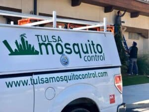 Spider Control in Tulsa